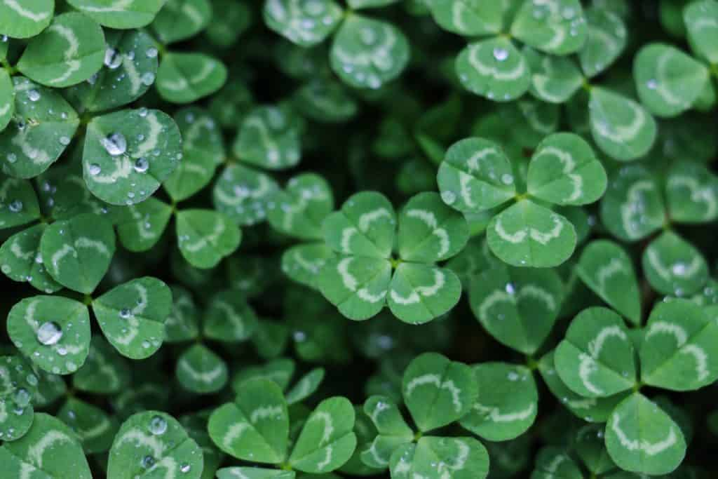 St. Patrick's Day Books for Toddlers and Preschoolers