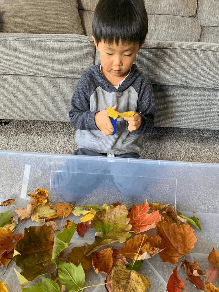 Leaves Unit Lesson Plan for Preschool at Home